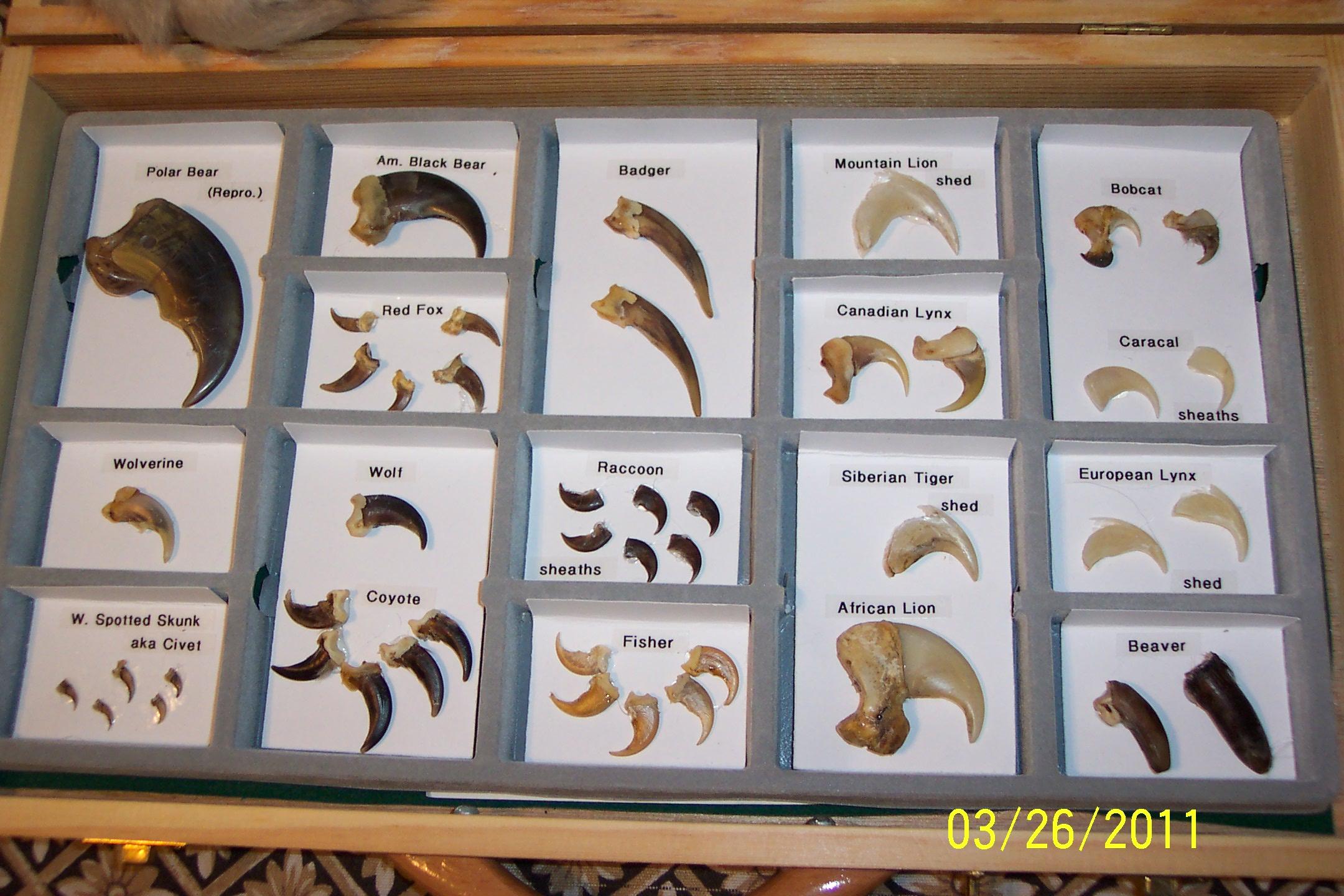 https://wildlifeeducationbybernie.files.wordpress.com/2011/09/100_59381.jpg