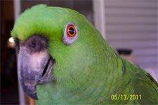 "Barnyard ""Burt"" Parrot"
