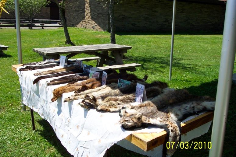 Carnivores of North America
