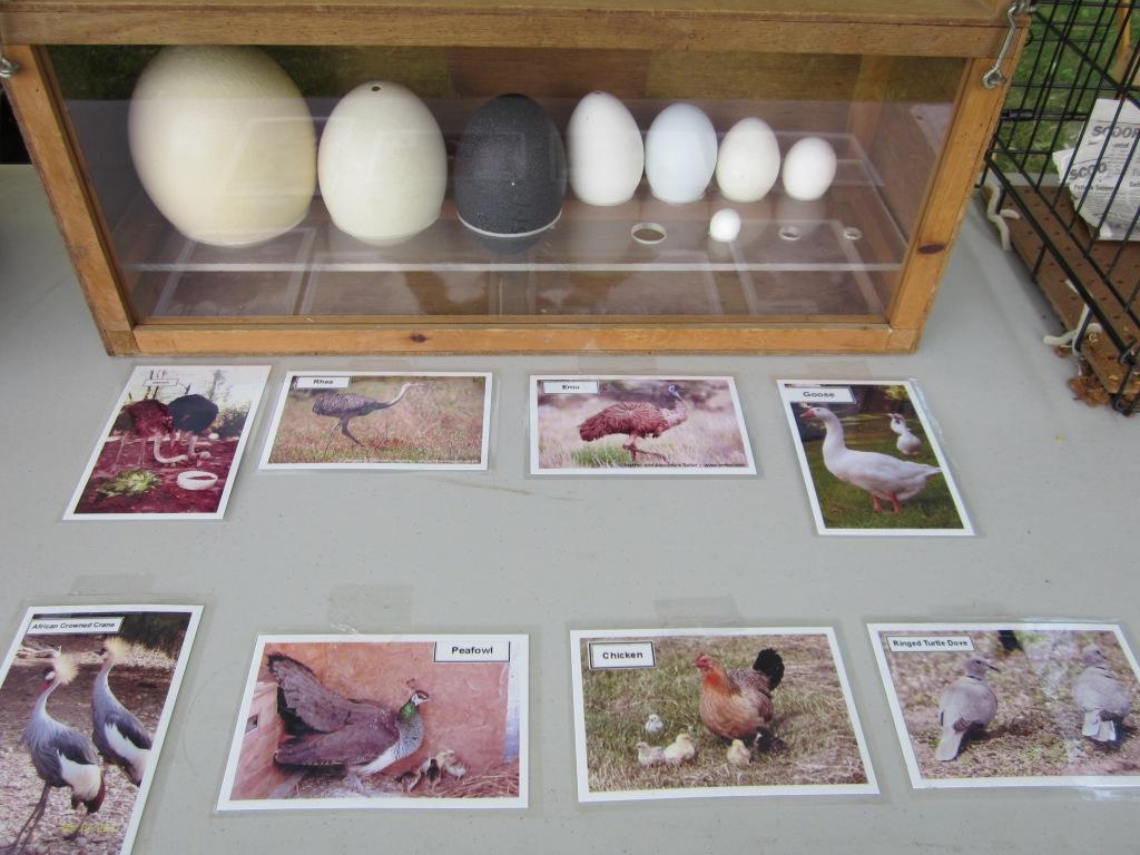 Eggs3548