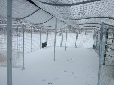 Heavy snow bending Max's roofing