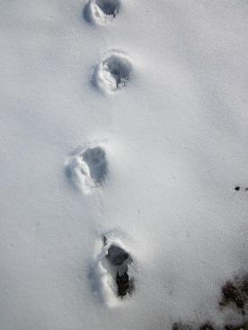 Looks like cat tracks