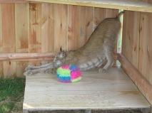 Max loving his pallet