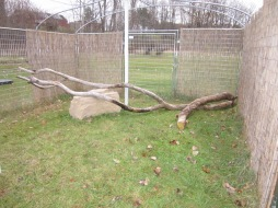 Dead tree in enclosure