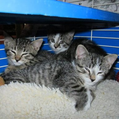 3 Rescued Kittens