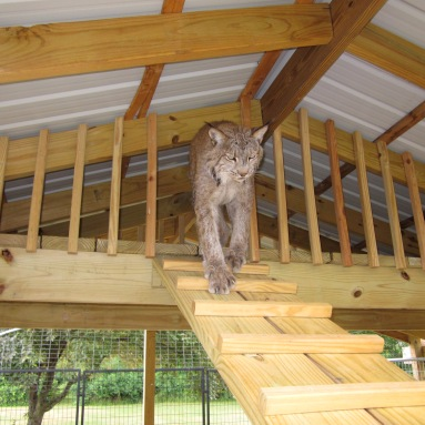 Max loving his loft